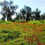 דרום אדום, מרכז קדם לטיולים