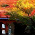 יפן בשלכת