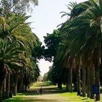 גן בוטני - מקווה ישראל